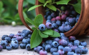 Blueberries Fat Burning Low Calorie Food
